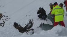L'aquila Robièi ritorna a volare dopo l'incidente