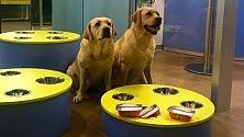 Un ristorante per i cani il lusso è a quattro zampe