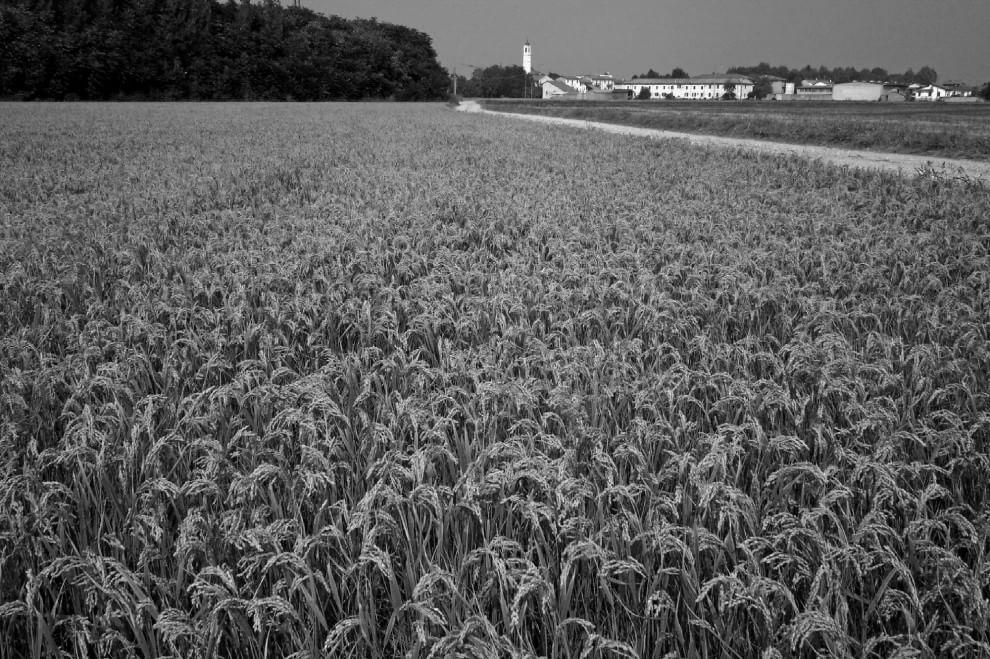 Vigevano terra di risaie: il reportage in bianco e nero