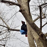 Milano, consigliere M5S 3 ore sull'albero da abbattere