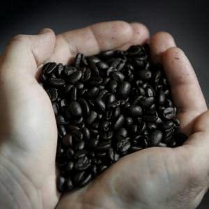 Expo, nella mega serra del caffè: degustazioni e laboratori. I percorsi dalla terra alla tazzina