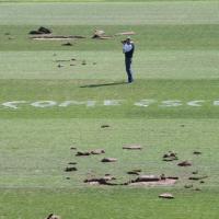Varese, blitz dei vandali allo stadio: il campo è devastato