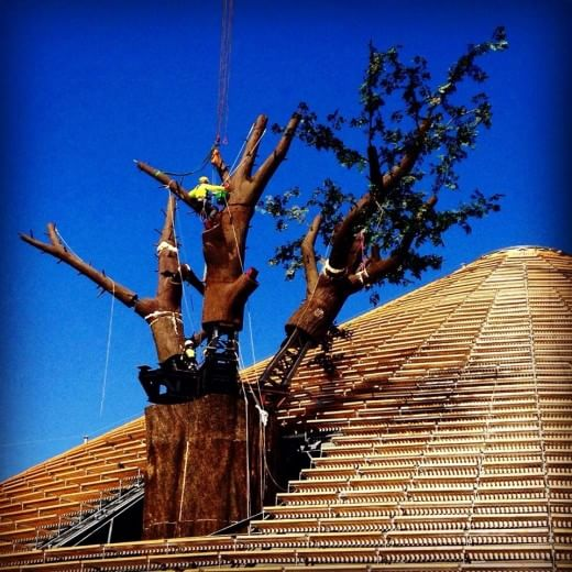 Expo, l'albero sfonda il soffitto del Padiglione Zero