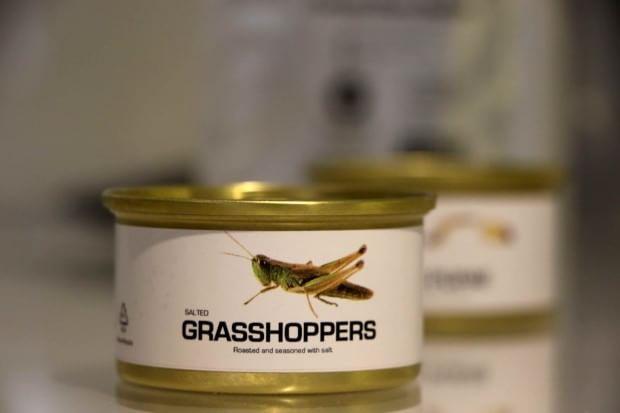 Expo: grilli in bustina o paté di vermi in vaschetta, è il cibo del futuro