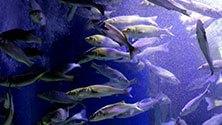 Tra pesci e meduse, un tuffo nei mari dell'Expo