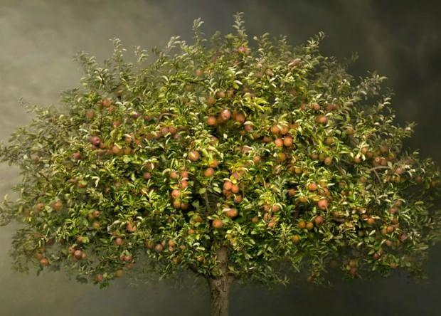 Expo quando gli alberi da frutto diventano opere d 39 arte for Quando piantare alberi da frutto