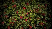 Gli alberi da frutto diventano opere d'arte