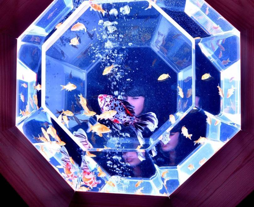 Milano l 39 arte del pesce rosso e i monumentali acquari for Acquario vignate