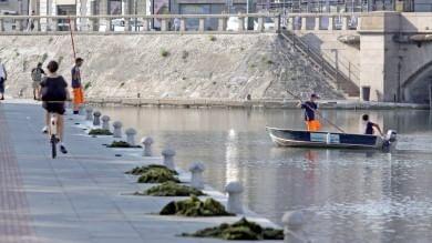 """Alghe in Darsena, l'imbarazzo di milanesi  e turisti: arriva la barca """"spazzino""""   foto"""