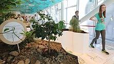 Expo celebra Munari  con 'il gioco delle foglie'