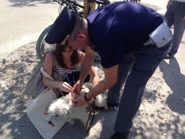 Expo, cane abbandonato fuori dai tornelli: la polizia lo libera
