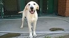Prigioniero in balcone  Il cane è sotto sequestro