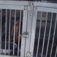 Milano, al buio senza cibo né acqua: blitz nell'allevamento lager per salvare 65 cani