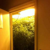 Milano, a fuoco la serra di marijuana allestita in cameretta: arrestato 17enne