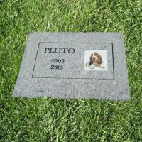 Milano, dal cane al pesciolino rosso: è nato il cimitero degli animali domestici