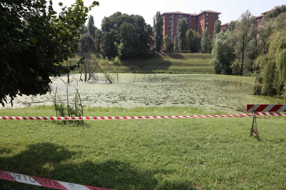 Milano moria di anatre il laghetto del parco lambro for Laghetto per anatre