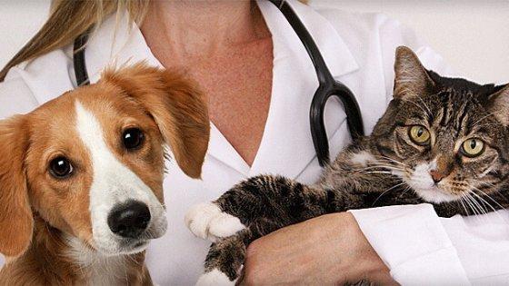 Avere animali in casa è un toccasana per la salute