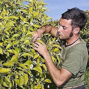 Il giovane che per amore della sua terra è tornato a distillare i fiori d'arancio