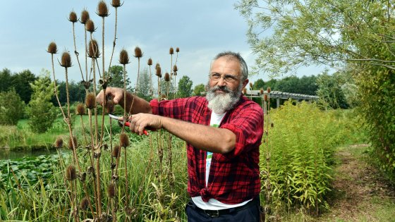 Milano arriva il giardiniere condotto aiuto for Giardiniere milano