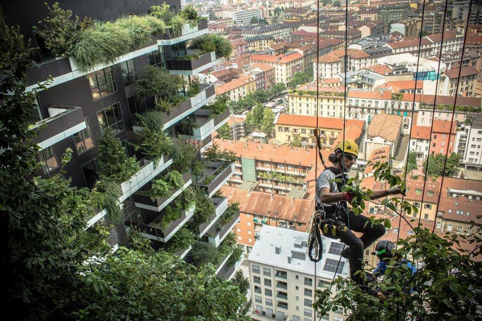 Milano i giardinieri volanti del bosco verticale for Lavoro architetto milano