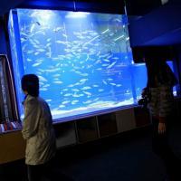 Expo, adozione internazionale per i pesci del Kuwait: ora in quarantena