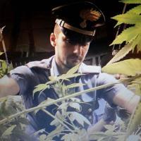 Rozzano, tecniche e macchinari hi-tech: la piantagione modello di marijuana