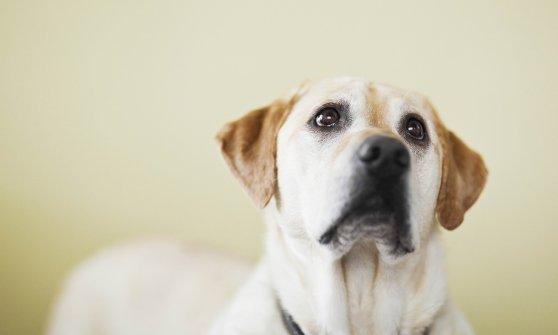 Milano, un cucciolo da salvare sotto l'albero: le campagne per l'adozione a distanza
