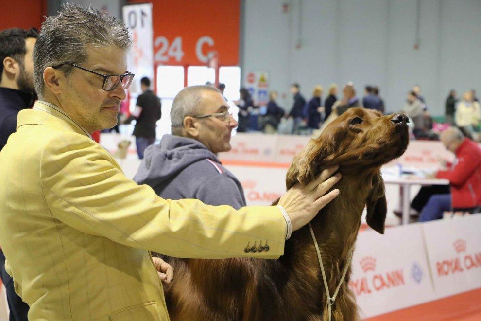 Milano, i cani più belli in mostra: 4mila in passerella