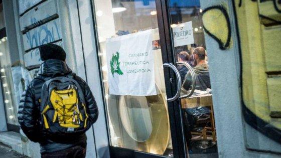 """""""Coltivate la vostra cannabis"""", a Milano il corso dei giovani del Pd: un seme in omaggio"""