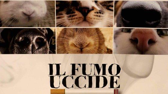 """Milano, """"il fumo uccide anche loro"""": la campagna per gli animali di casa. I più esposti? Gatti e cani a muso lungo"""