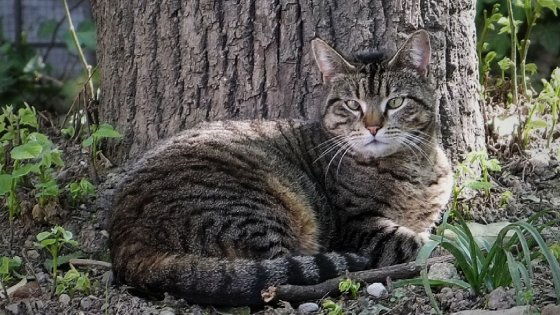 Milano, nasce il primo 'gattoparco' d'Italia: 6.400 metri dedicati ai felini domestici