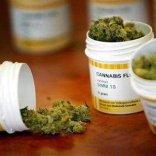 Pirellone, cannabis terapeutica  anche a domicilio: 6mila firme  per dire sì. Si annuncia battaglia