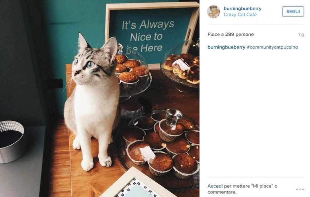 Milano, quando il gatto è padrone del bar: Instagram non resiste