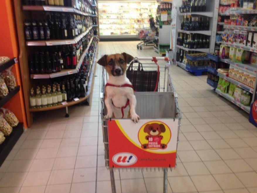 Basta cani alla catena, a Luino nel carrello della spesa c'è posto anche per loro