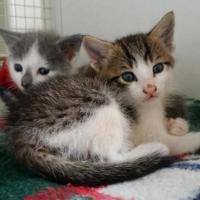 Pavia, gattini di un mese abbandonati al cimitero. L'Enpa li salva:
