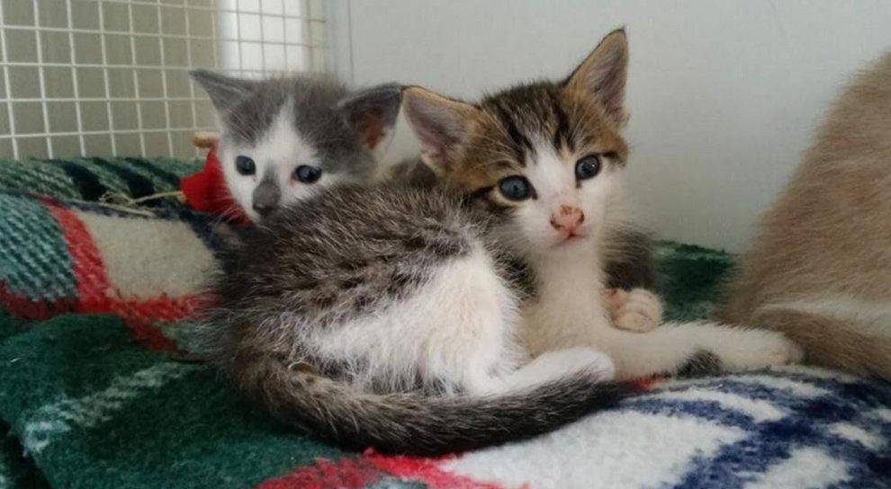 """Pavia, gattini di un mese abbandonati al cimitero. L'Enpa li salva: """"Adottateli"""""""