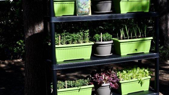Milano, i piatti di plastica diventano vasi per le piante: nasce l ...