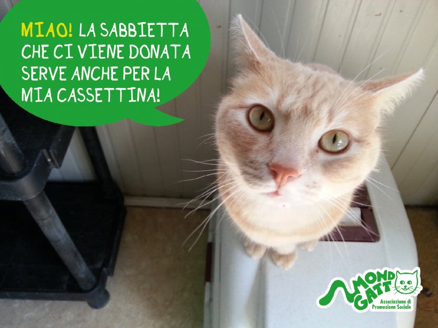 Milano Nella Testa Di Un Gatto Richieste Daiuto In Stile Fumetto