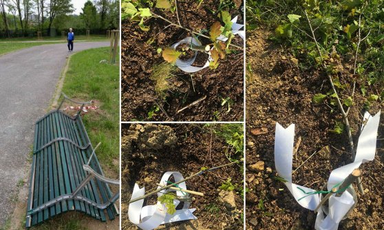Milano, vandali di nuovo in azione al parco Chiesa Rossa: tagliate 20 querce appena piantate