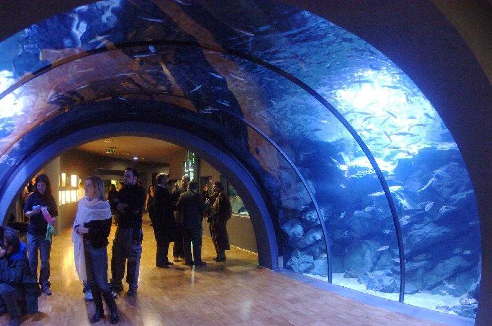 milano l 39 acquario compie 110 anni ingresso gratis per