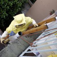 Milano, api scatenate invadono la città: in un giorno 40 interventi dei