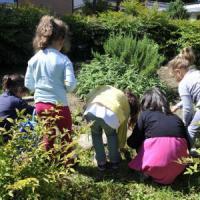 Milano, 134 orti realizzati nelle scuole dell'infanzia per conoscere la