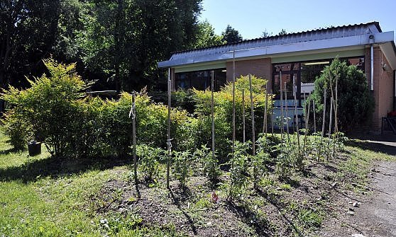 Milano, 134 orti realizzati nelle scuole dell'infanzia per conoscere la natura e il rispetto dell'ambiente