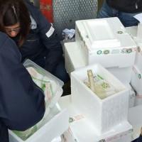 Maxi sequestro all'Ortomercato di Milano: al macero 6mila mozzarelle e 100mila euro di latticini