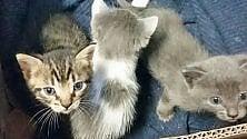 Gattini abbandonati  in palazzo da demolire  salvati dalla polizia