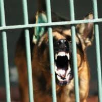 Monza, lo fa azzannare dal suo cane: in casa gli trovano una pistola e una katana. Arrestato