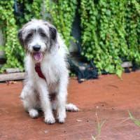 Boff, il cane abbandonato nel Milanese ha trovato una nuova famiglia