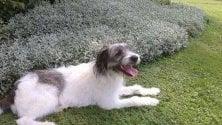 Dopo l'abbandono, la nuova vita di Boff il cane cambia anche nome: ora è Morgan
