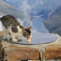 Sondrio, l'impresa del gatto escursionista: la scalata di Orione a 3.100 metri