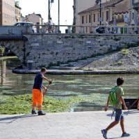 Milano, una foresta di alghe nella nuova Darsena: